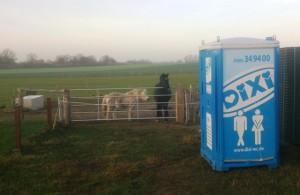 Bild: Baustellentoilette und Pferde